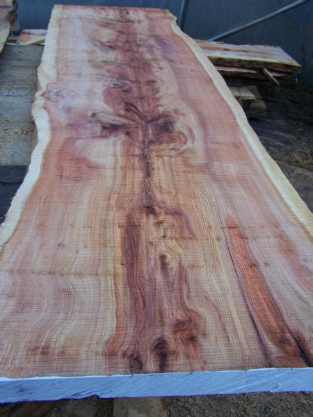 milled yew, spalted beech, ash slabs for sale - Milling