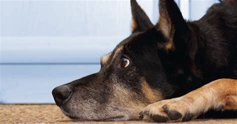Treating your pet's separation anxiety - Dogtime