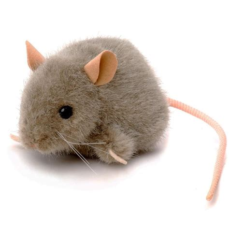Mice and rats history and some interesting facts