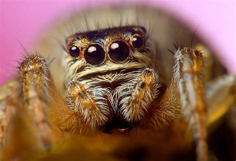 40 Interesting Spider Facts - Serious Facts