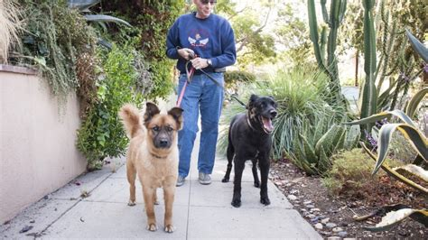 How to Find a Trustworthy Dog Walker | Angie's List