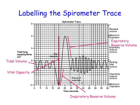 A-level Biology Questions by topic : Spirometer and Lung
